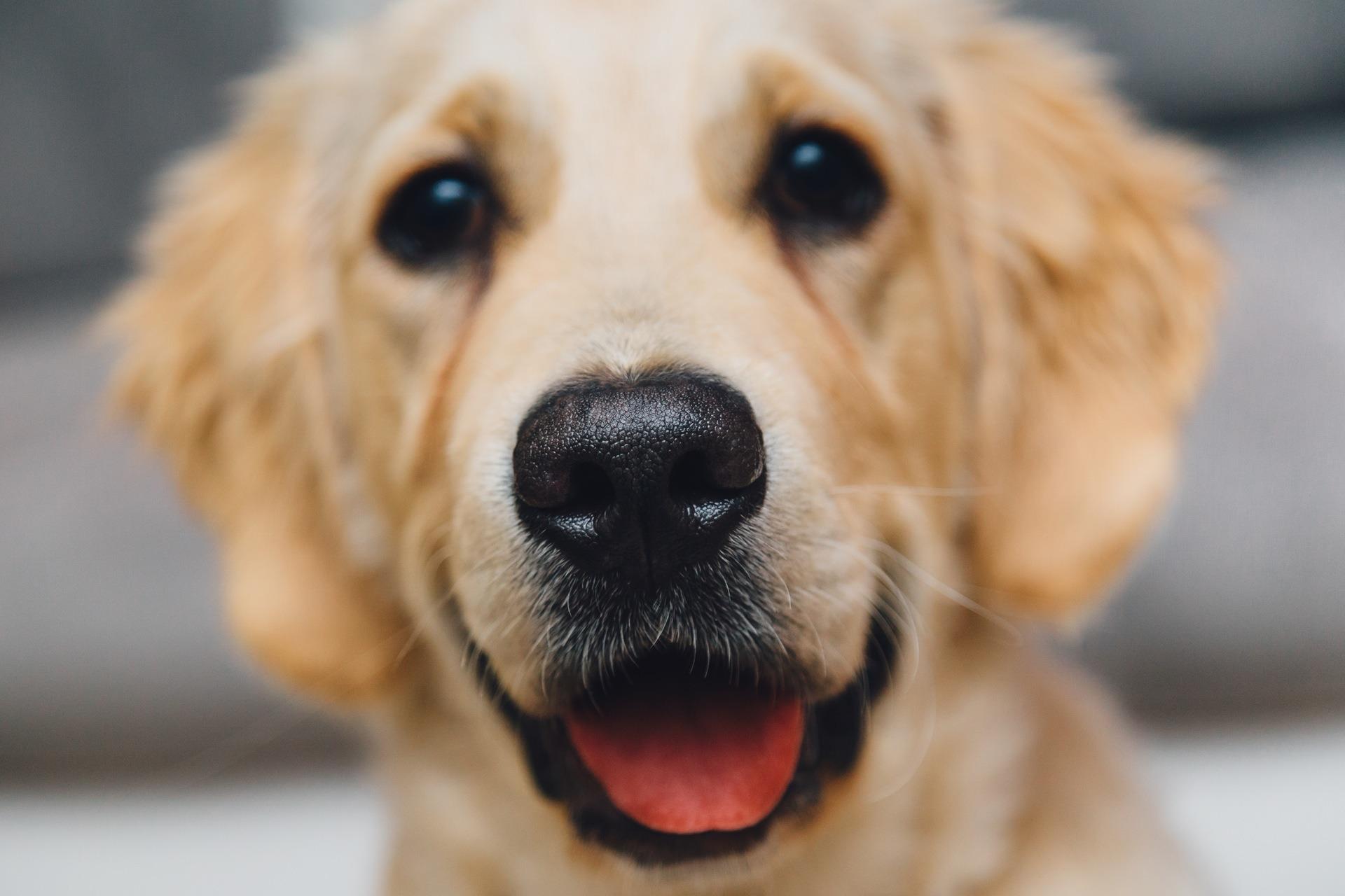 Hundar och Gud